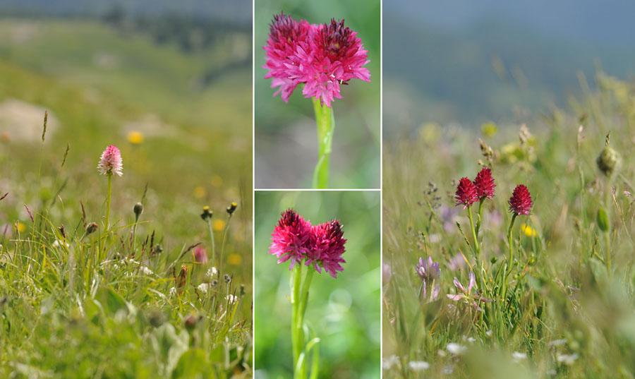 Virée dans les Alpes italiennes, du Piémont aux Dolomites Dsc_0055