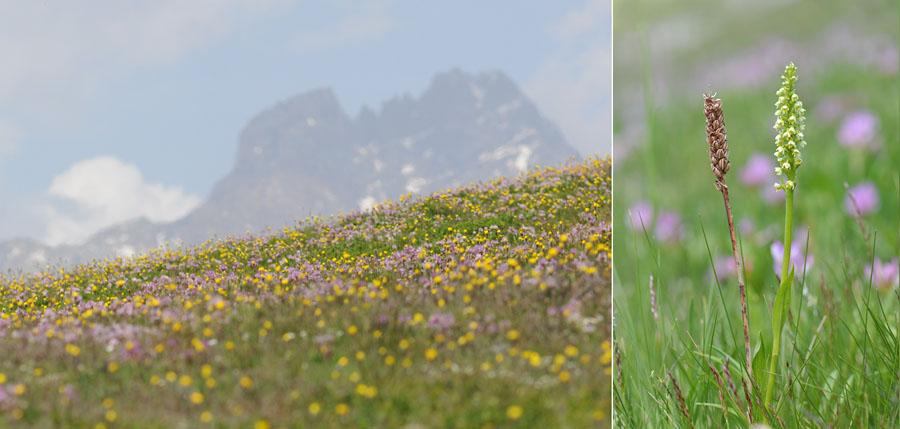 Virée dans les Alpes italiennes, du Piémont aux Dolomites Dsc_0136