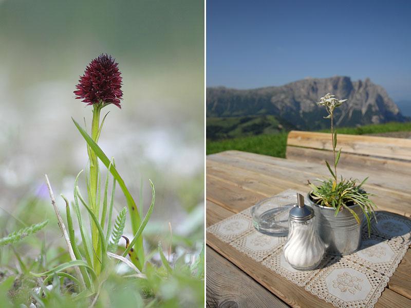 Quelques nigritelles d'Autriche et des Dolomites - Page 2 Dsc_0212