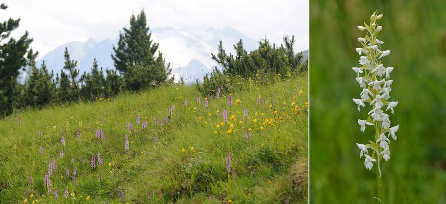 Virée dans les Alpes italiennes, du Piémont aux Dolomites Dsc_0328
