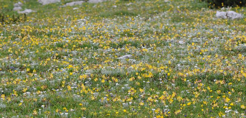 Quelques nigritelles d'Autriche et des Dolomites Dsc_0415