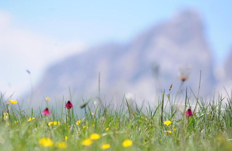 Quelques nigritelles d'Autriche et des Dolomites - Page 2 Dsc_0416