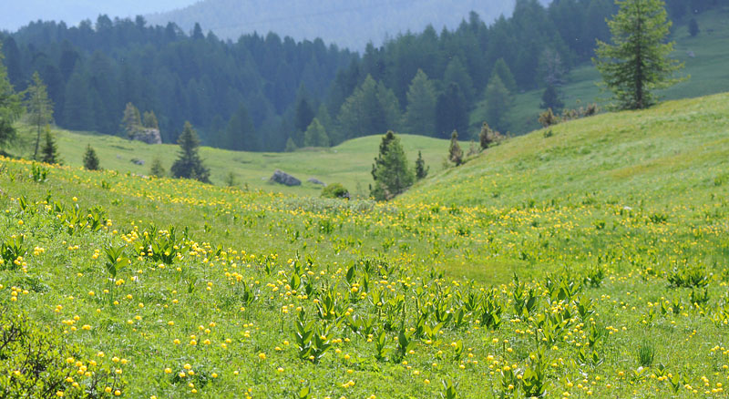 Quelques nigritelles d'Autriche et des Dolomites - Page 2 Dsc_0418
