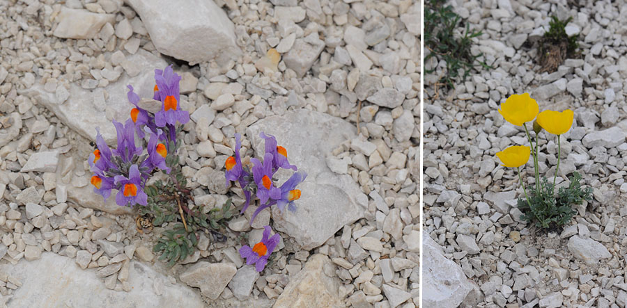 Virée dans les Alpes italiennes, du Piémont aux Dolomites Dsc_0438