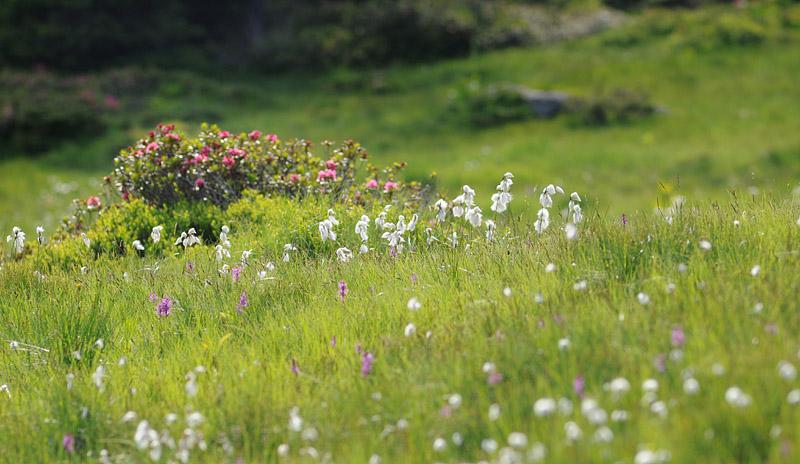 Quelques nigritelles d'Autriche et des Dolomites - Page 3 Dsc_0710