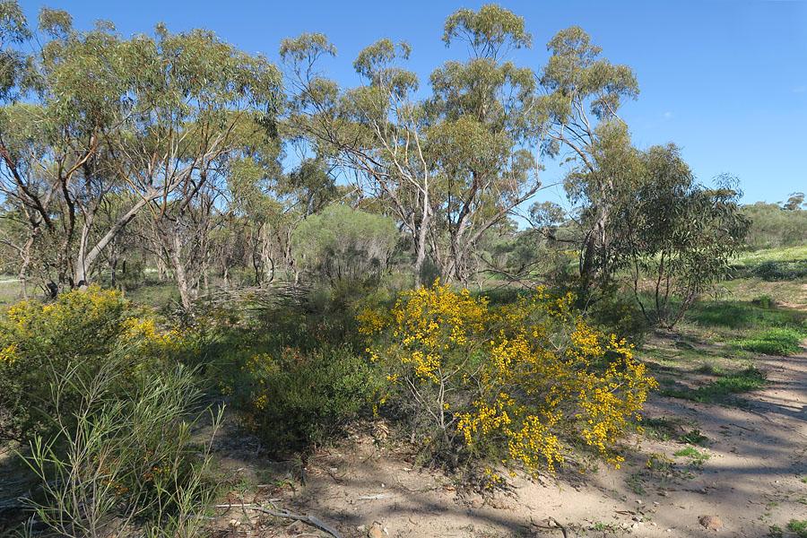 Quelques orchidées du Sud Ouest Australien - Page 2 Img_9212