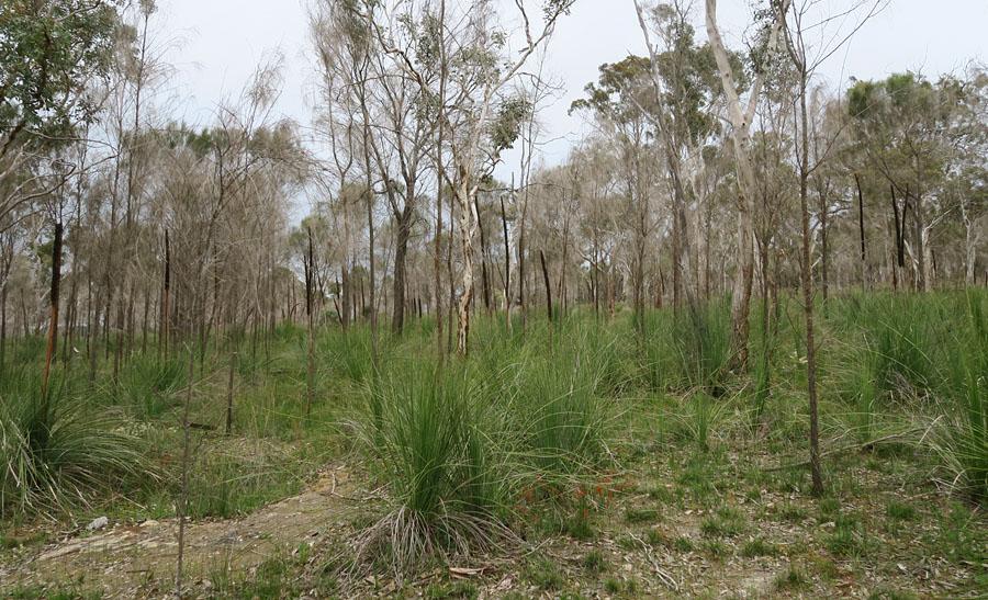 Quelques orchidées du Sud Ouest Australien - Page 2 Img_9213