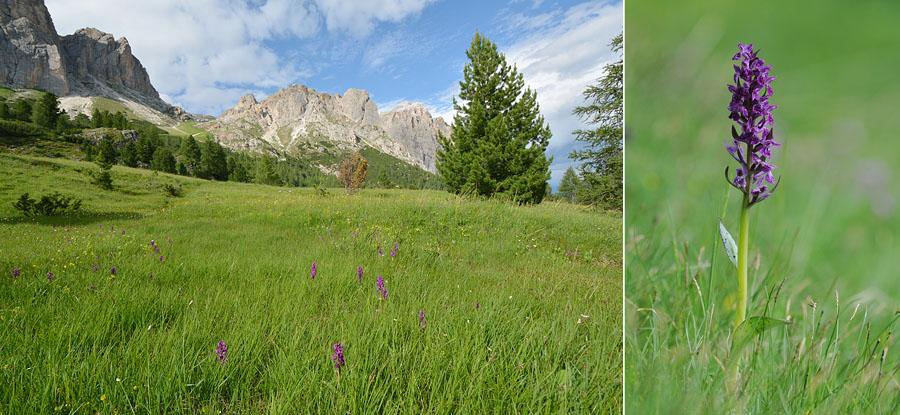 Virée dans les Alpes italiennes, du Piémont aux Dolomites Jlr_1711