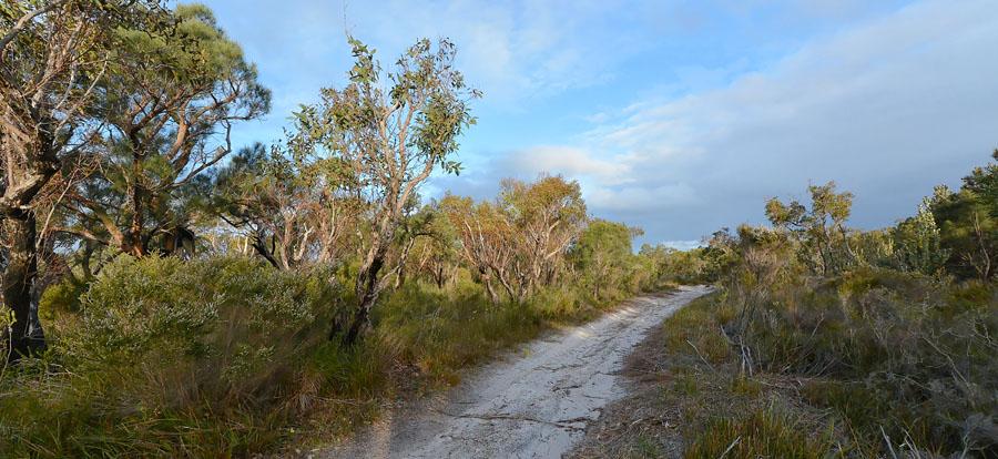 Quelques orchidées du Sud Ouest Australien - Page 4 Jlr_8212