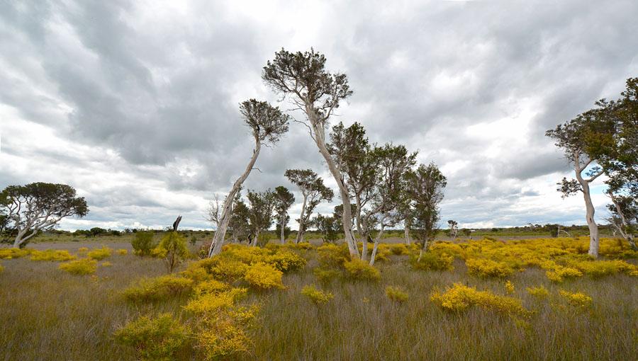 Quelques orchidées du Sud Ouest Australien - Page 4 Jlr_8412