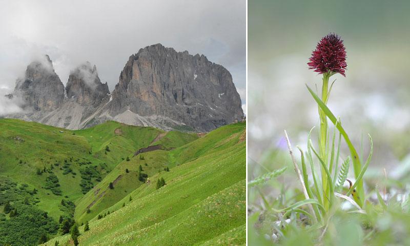 Quelques nigritelles d'Autriche et des Dolomites - Page 2 Jlr_9411