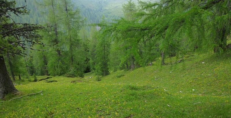 Quelques nigritelles d'Autriche et des Dolomites P1150910