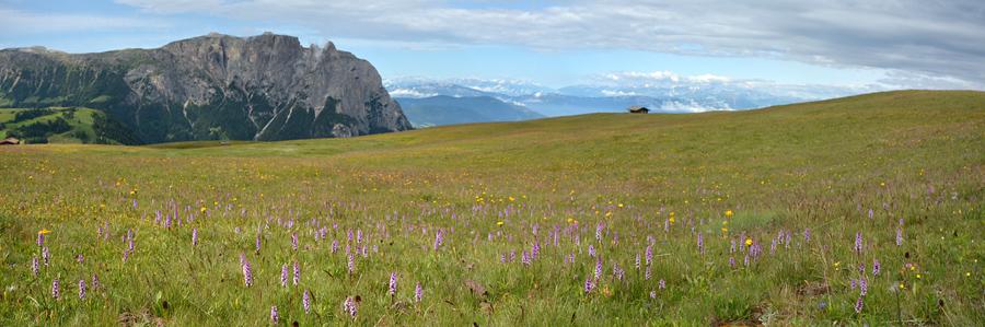 Virée dans les Alpes italiennes, du Piémont aux Dolomites Panora31