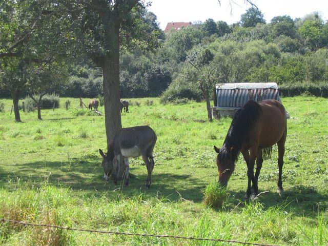 les chevaux de Mer le Comte 14_aou10