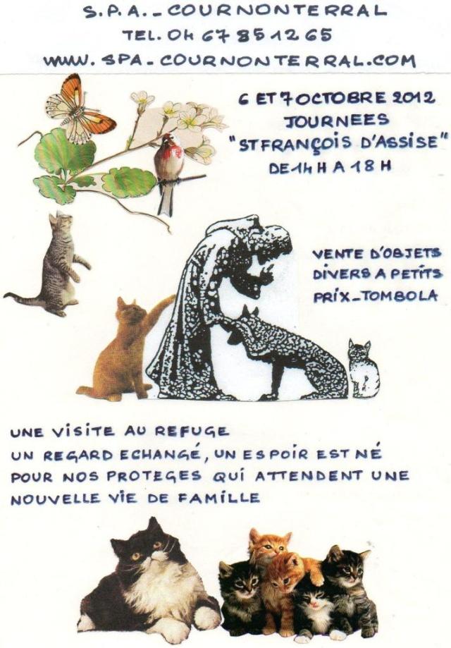 Refuge des chats de Cournonterral - SPA Stfran10