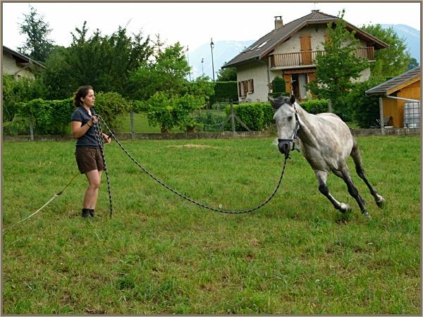 ♣ photos de vous à cheval - Page 2 P1160810