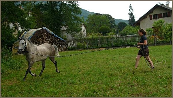 ♣ photos de vous à cheval - Page 2 P1160910