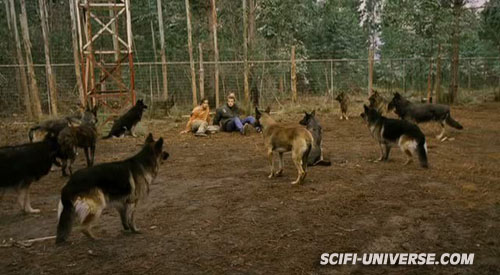 the breed Breed_10