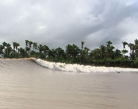 L'estuaire de l'Amazone : beau et surprenant à plus d'un titre ! Mascar10