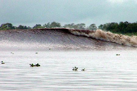 L'estuaire de l'Amazone : beau et surprenant à plus d'un titre ! Mauroe10