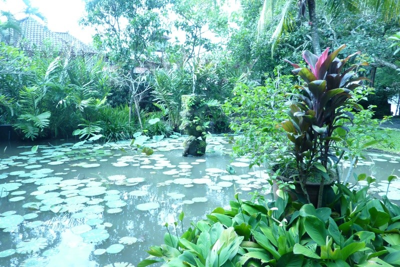 Bali, cuisine et décor P1030111