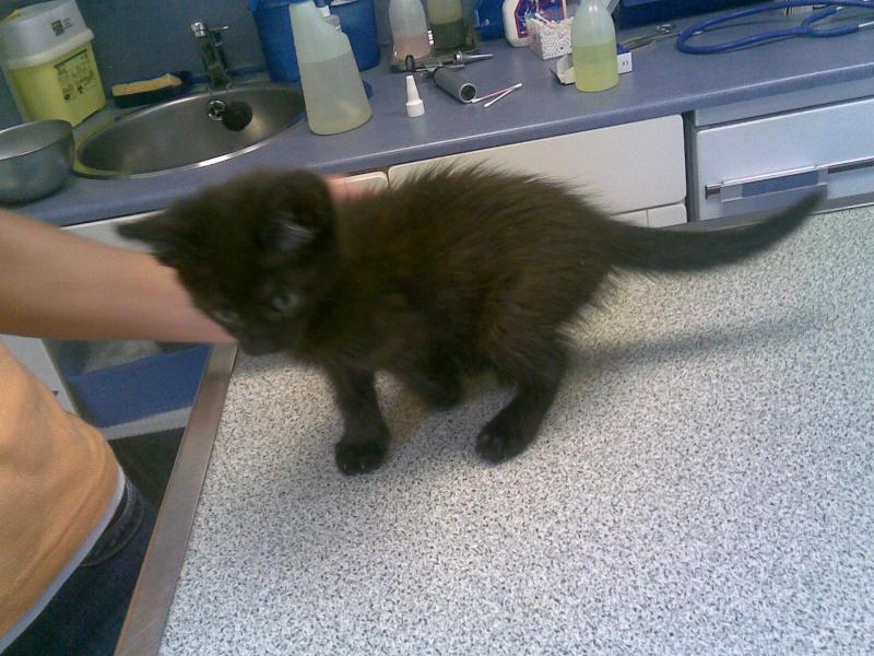 Adoption particuliere, petite puce de 2.5 mois Photo_37