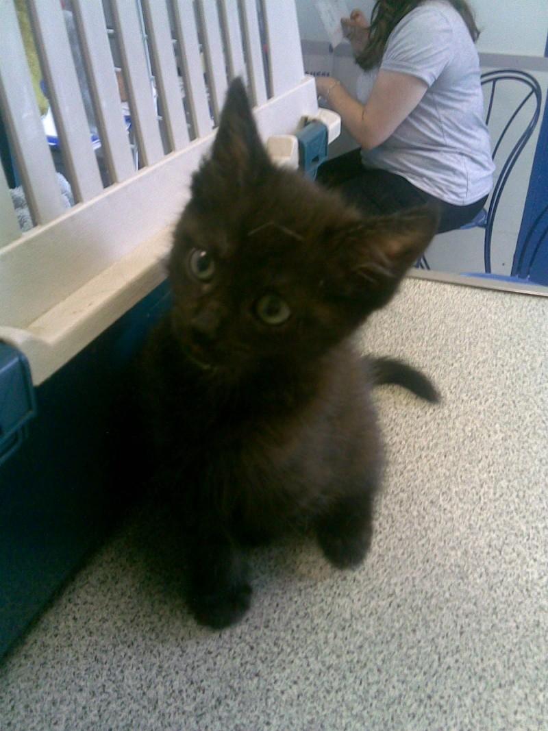 Adoption particuliere, petite puce de 2.5 mois Photo_38