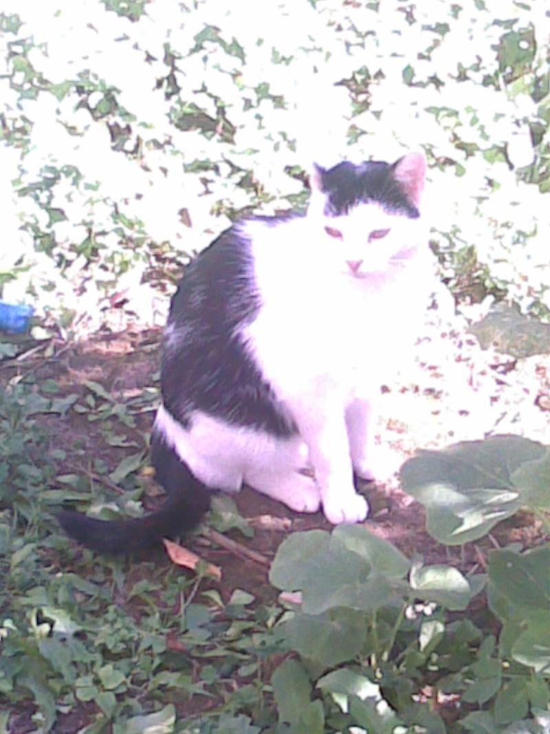 Mina, 6 mois, blanche et noire Photo_39