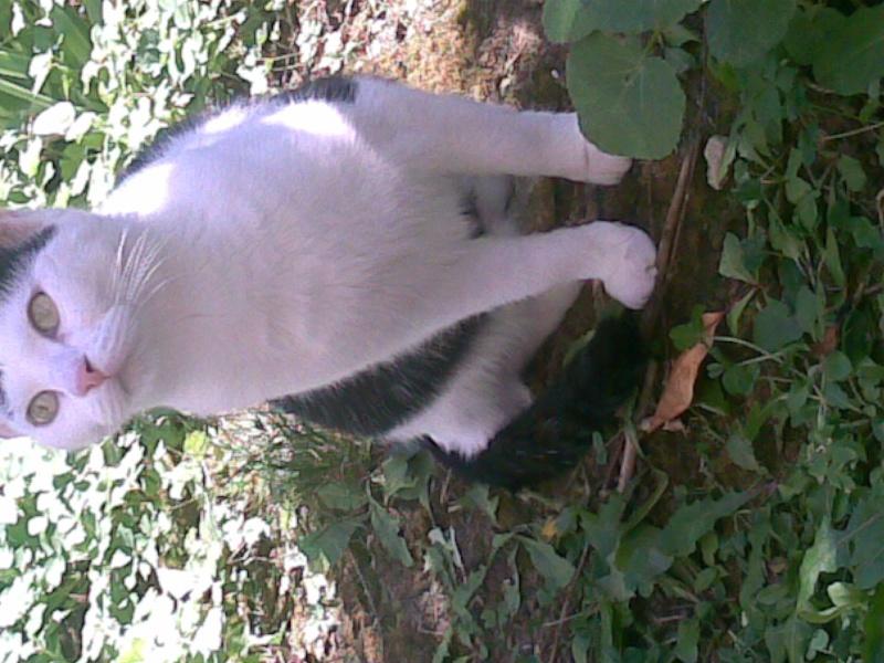 Mina, 6 mois, blanche et noire Photo_44