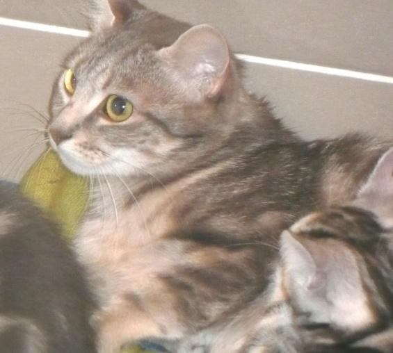 Themys 1 an et ses filles 2 mois (peuvent être réservées) Themys17