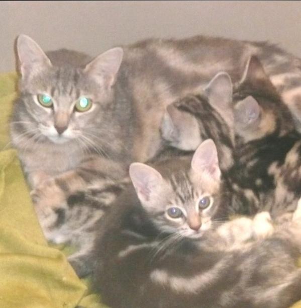 Themys 1 an et ses filles 2 mois (peuvent être réservées) Themys18