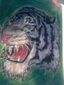 j'effectue le portrait de votre animal Photo011