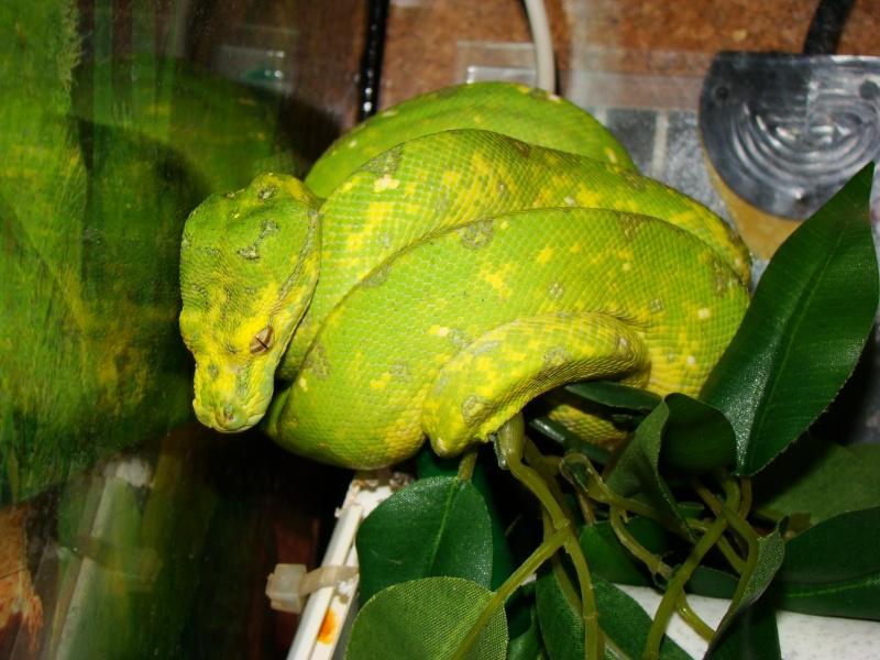c'est vert avec des dents Photo_13