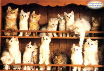 Une petite nouvelle Chats_10