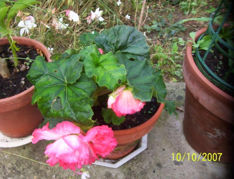 question pour future jardiniere de bego peut etre Photo_12
