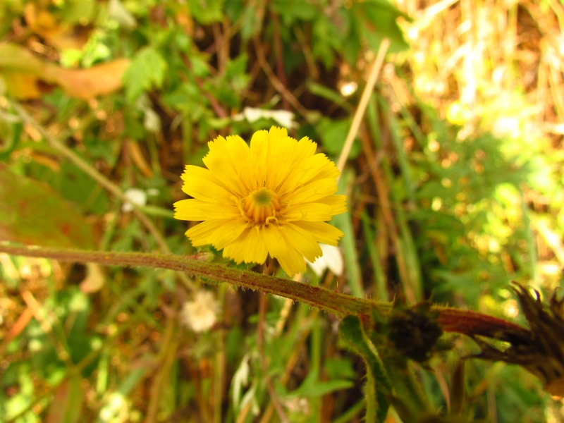 Toutes les fleurs de couleur jaune 123_1910