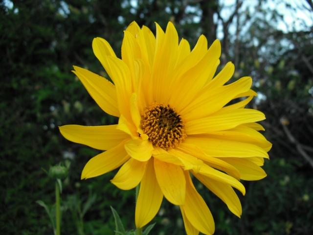 Toutes les fleurs de couleur jaune Aout2218