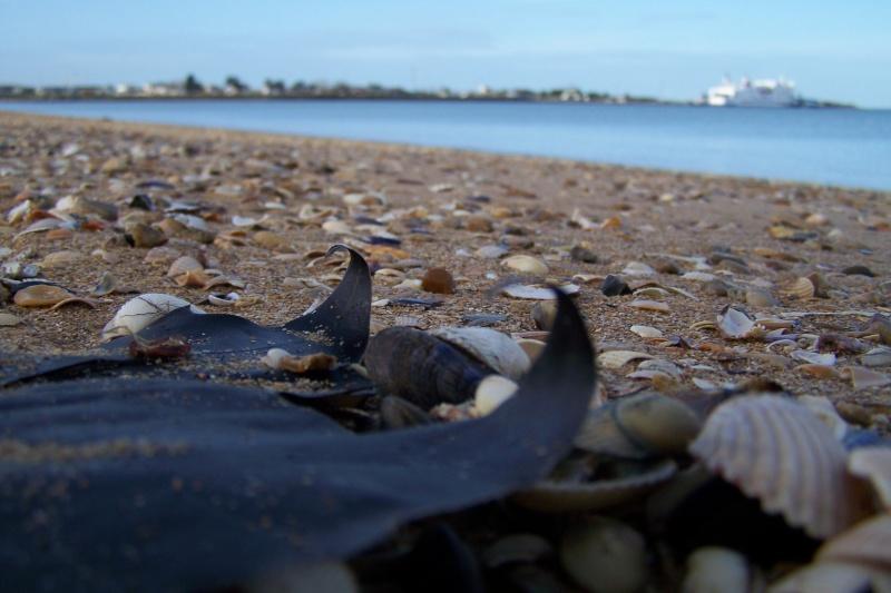 tout le monde est heureux à la mer  Janvie13