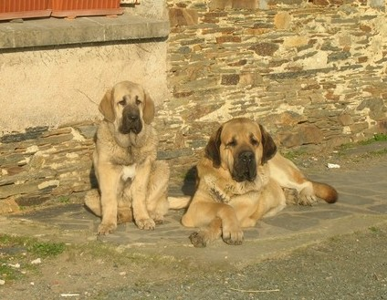 la croissance de vos chiens... Cameli19