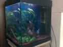 créer un forum : aquariophilie bouche du rhone - Portail Photo010