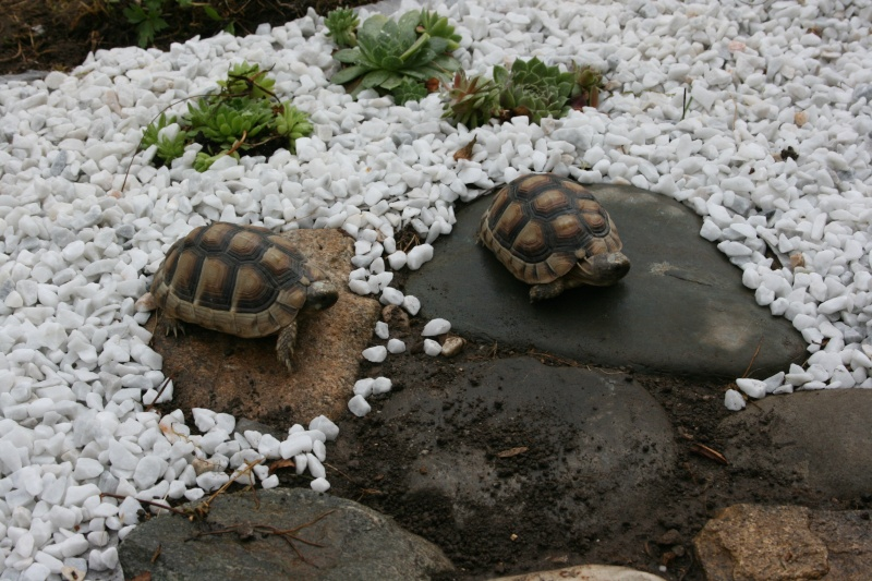 mes choupettes Tortue16