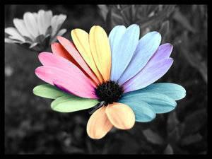 Belles images 14784210