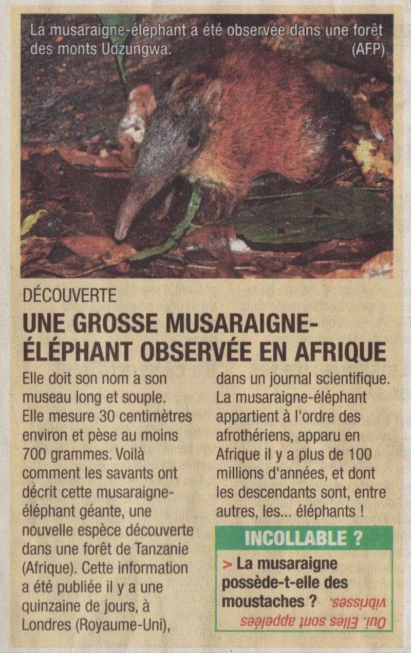 Nouvelle musaraigne Musara10