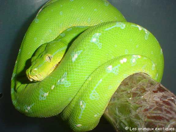 deux serpents dangereux Index10