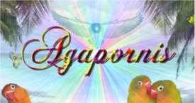 Sito Agapornis Banner11