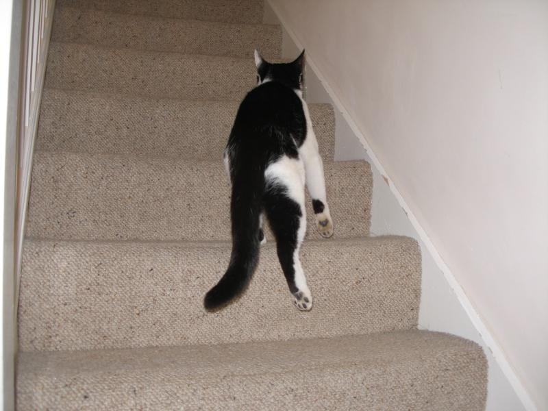 Αγγλό-γατες!!! - Σελίδα 4 P1280316