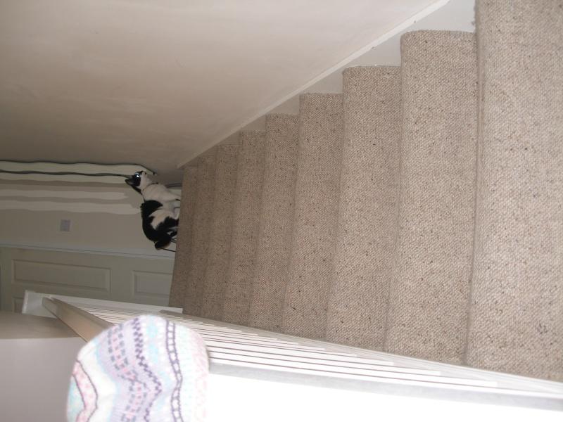 Αγγλό-γατες!!! - Σελίδα 4 P1280317