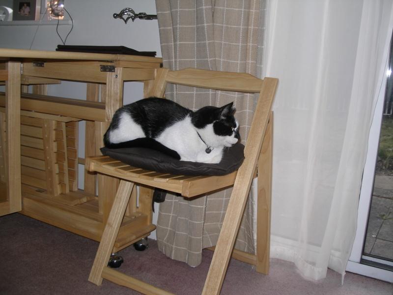 Αγγλό-γατες!!! - Σελίδα 5 P1290310