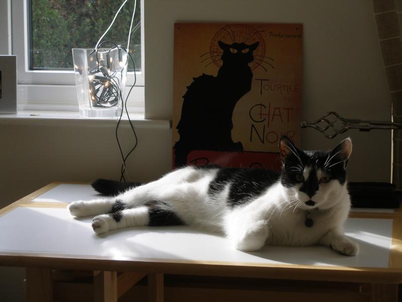 Αγγλό-γατες!!! - Σελίδα 5 P2030311