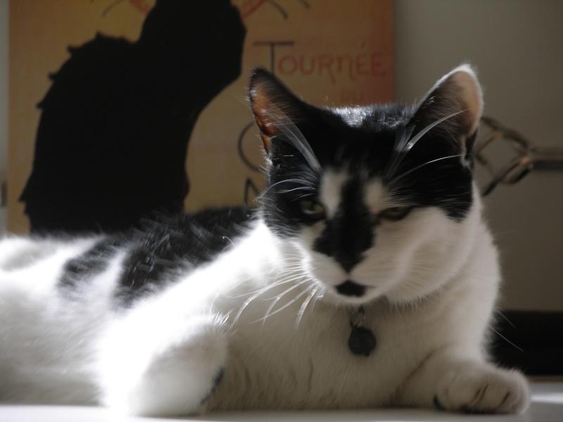 Αγγλό-γατες!!! - Σελίδα 5 P2030312